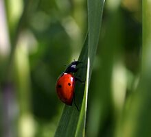 Lady Bug by Cathy L. Gregg