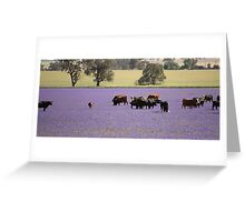 Cows in a field of Blue. Greeting Card