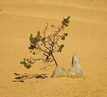 Pinnacle Tree by eramophla