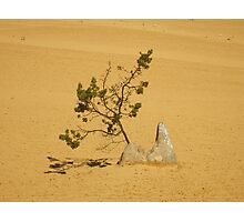 Pinnacle Tree Photographic Print