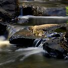 Rosebud Stream 2 by KeepsakesPhotography Michael Rowley