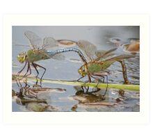 Dragons Landing Art Print