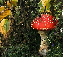 Fly Agaric 2 by gordy
