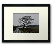 Bleak Tree Framed Print