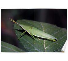 I am a leaf... Poster