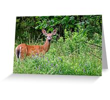 White Tailed Deer Doe - Ontario Greeting Card