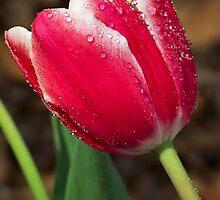 Spring 14 by bamagirl38