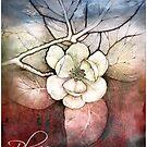 blossom by cristina