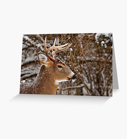 Buck Portrait - Ottawa, Ontario Greeting Card