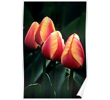 Four Tulips Poster