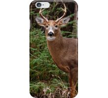 Buck White-tail Deer in the forest- Ottawa, Ontario iPhone Case/Skin