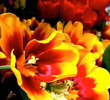 Tulips on Fire by blackjack