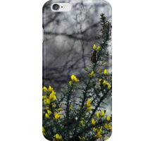Common Gorse in the Woodland iPhone Case/Skin