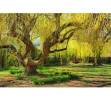 Spring in Batford Photographic Print