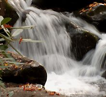 Mountain Stream in the Smokys by Danny Close