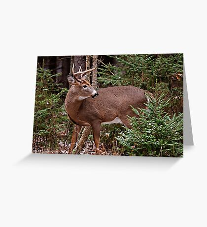 Deer Buck - Ottawa, Ontario - 7 Greeting Card