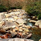 Great Smoky Mountains Stream by Danny Close
