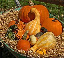 Pumpkin Patch by terrylazar