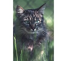 """Chat - Cat """" Tchink boom"""" 02 (c)(t) ) by Olao-Olavia / Okaio Créations 300mm f.2.8 canon eos 5 1989  Photographic Print"""