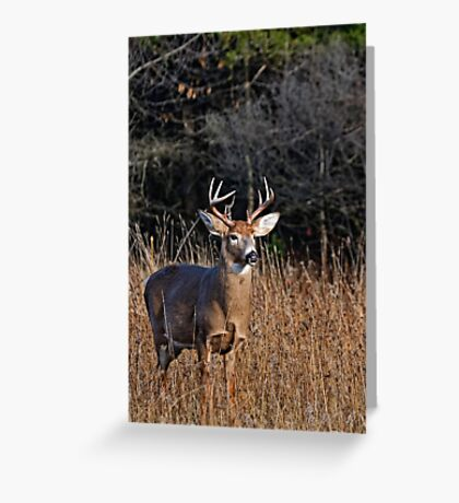 Deer Buck Portrait - Ottawa, Ontario Greeting Card