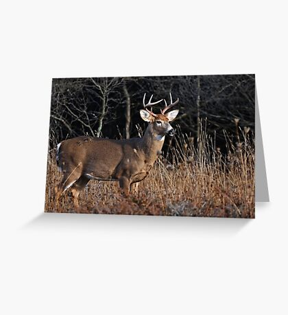 Deer Buck - Ottawa, Ontario - 6 Greeting Card