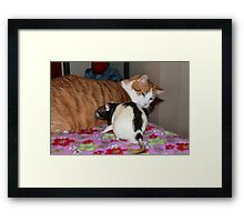 Why is your tail all furry?  Framed Print