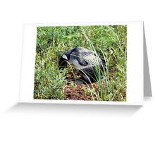 LOON TURNING EGGS Greeting Card