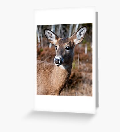 Deer Doe - Ottawa, Ontario Greeting Card