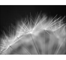 Beautiful weeds. Photographic Print