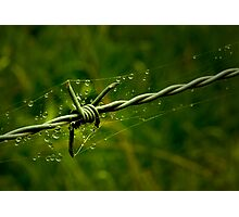 Beauty and the Barbed Wire Photographic Print