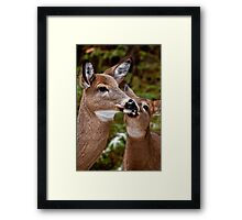White Tailed Deer and Baby Framed Print