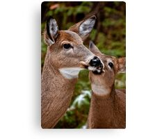 White Tailed Deer and Baby Canvas Print