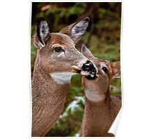 White Tailed Deer and Baby Poster