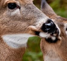 White Tailed Deer and Baby Sticker