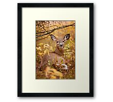 White Tail Deer Relaxing Framed Print