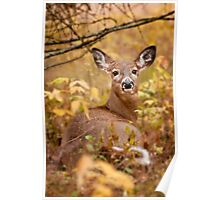 White Tail Deer Relaxing Poster