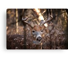 White Tailed Deer Buck In Woods Canvas Print