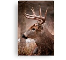 White Tailed Deer Buck Canvas Print