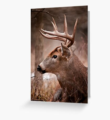 White Tailed Deer Buck Greeting Card