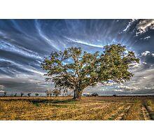 Dora's Tree 2 Photographic Print
