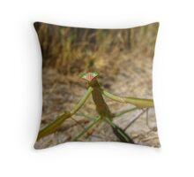 Wary Praying Mantis Throw Pillow