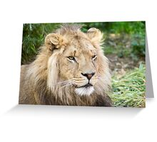 122014 lion Greeting Card
