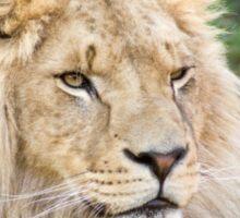 122014 lion Sticker
