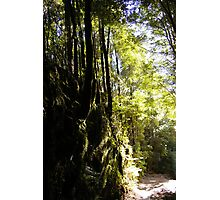 Forest Cutting Photographic Print