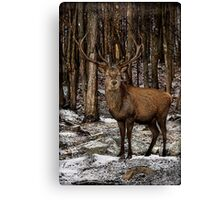 Forest Monarch Canvas Print