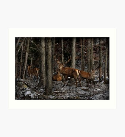 Elk in the Forest Art Print