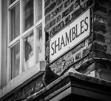 Shady Pigeon of the Shambles by Nicole Petegorsky
