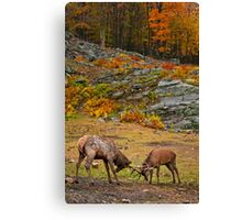 Elk And Red Deer Sparing Canvas Print