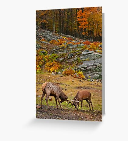 Elk And Red Deer Sparing Greeting Card