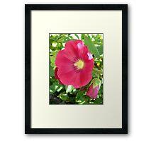 Full Pink Hollyhock Framed Print